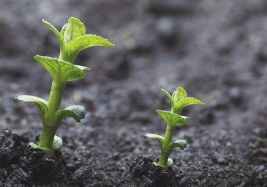 20150204002407-growth